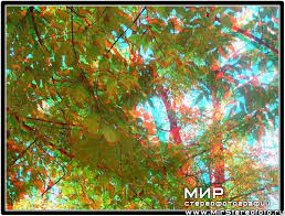 Осенний лес - Мир стерео фотографий